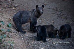 Vizita la observatorul de urs