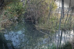 Rezervatia padurea si mlastinile eutrofe de la Prejmer